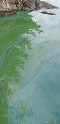 algae-flickr-rock