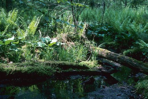 Fate of rare Wisconsin wetland at stake in upcoming court decision